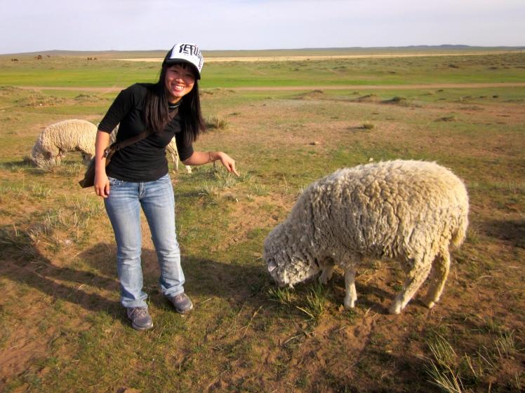 這麼胖這麼毛的綿羊耶!