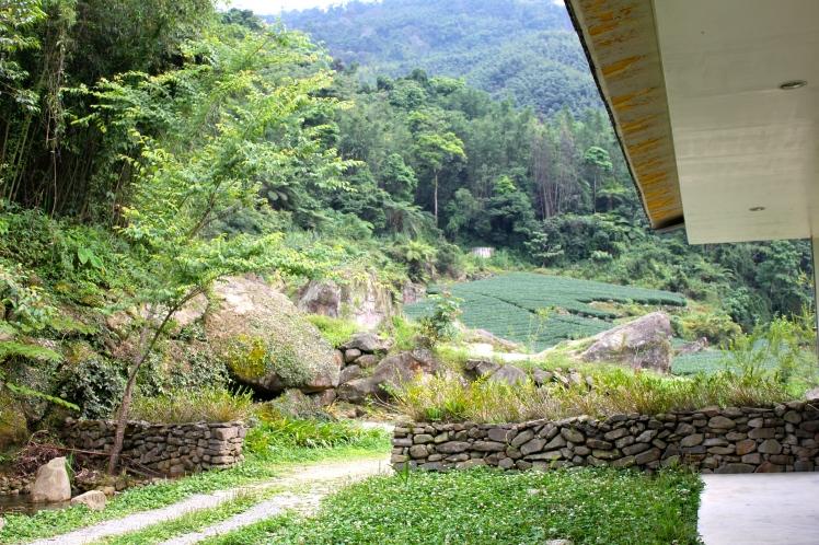 眾綠環繞的感覺,民宿外面是茶園
